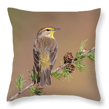 Palm Warbler  Throw Pillow by Daniel Behm