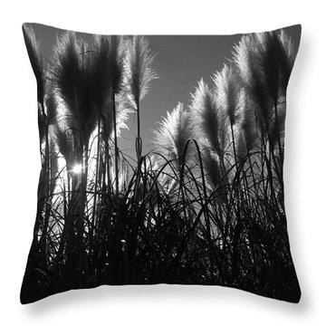 Pampas Grass Tufts In Silhouette  Throw Pillow