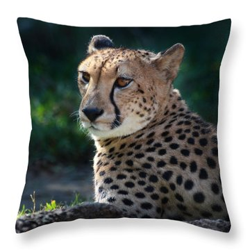 Pampered Kitty Throw Pillow by Joseph G Holland
