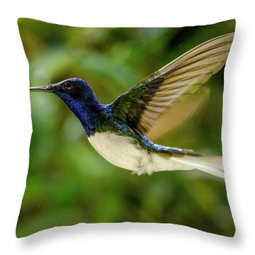 Throw Pillow featuring the photograph Panama Hummingbird by Rob Tullis