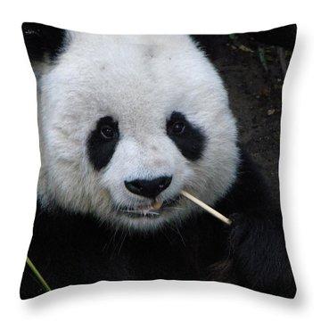 Throw Pillow featuring the photograph Panda by Amanda Eberly-Kudamik