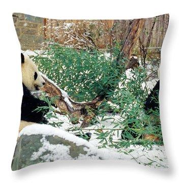 Panda Bears In Snow Throw Pillow