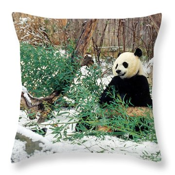 Panda Bears In Snow Throw Pillow