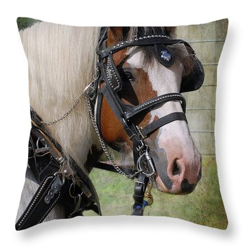 Pandora In Harness Throw Pillow by Fran J Scott