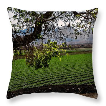 Panoramic Of Winter Lettuce Throw Pillow by Robert Bales