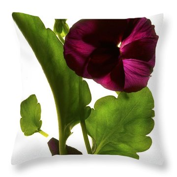 Pansy Purple Throw Pillow