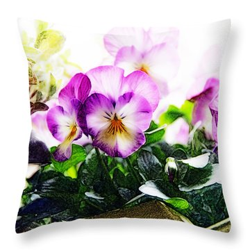Throw Pillow featuring the photograph Pansy by Selke Boris