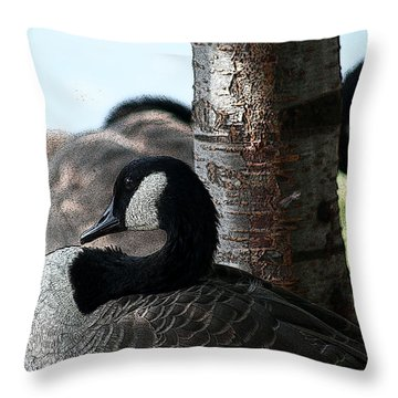 Throw Pillow featuring the photograph Pap Daddy Big Spring Park by Lesa Fine