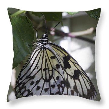 Paper Kite Throw Pillow by Anne Rodkin