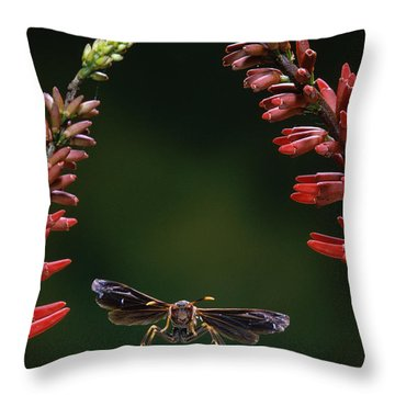 Paper Wasp In Flight Throw Pillow by Stephen Dalton