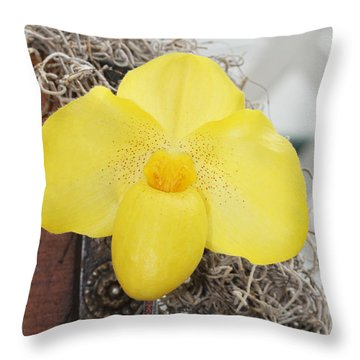 Throw Pillow featuring the photograph Paphiopedilum Fumis Gold by Judy Whitton