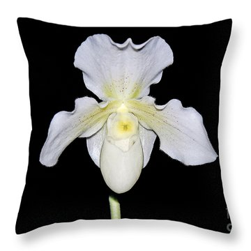 Paphiopedilum Orchid F.c. Puddle Superbum  Throw Pillow by Susan Wiedmann