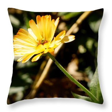 Throw Pillow featuring the photograph Parade by Photographic Arts And Design Studio