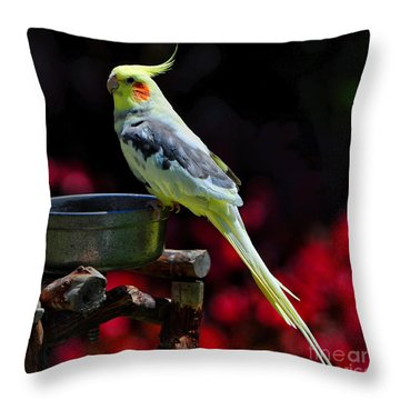 Parakeet Bird Throw Pillow
