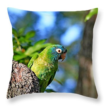 Parakeet In The Park Throw Pillow