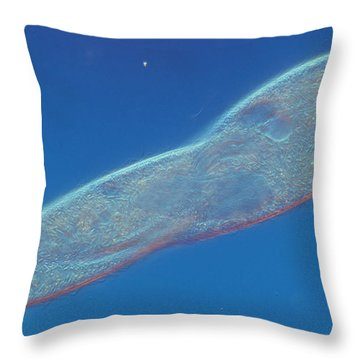 Paramecium Multimicronucleatum Lm Throw Pillow by Michael Abbey