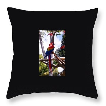 Throw Pillow featuring the photograph Parrot by Susan Garren