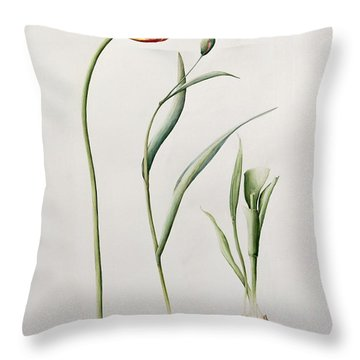 Parrot Tulip Throw Pillow by Iona Hordern