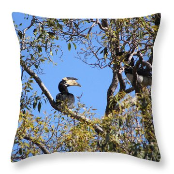 Hornbills With A Black Eye Throw Pillow by Four Hands Art