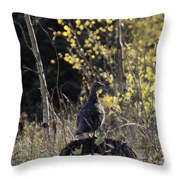 Throw Pillow featuring the photograph Partridge On Pine Stump by Daniel Hebard