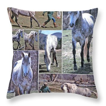 Paso Fino Stallion Horsing Around Throw Pillow by Patricia Keller