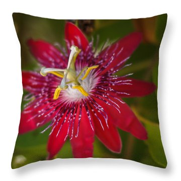 Throw Pillow featuring the photograph Passion Flower by Jane Luxton
