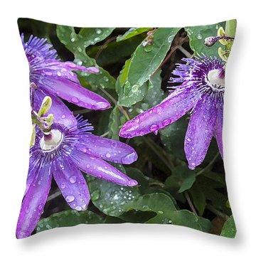 Passion Vine Flower Rain Drops Throw Pillow by Rich Franco