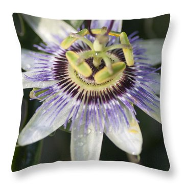 Passionflower Throw Pillow by Richard Thomas