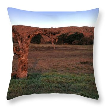 Past It's Prime Throw Pillow