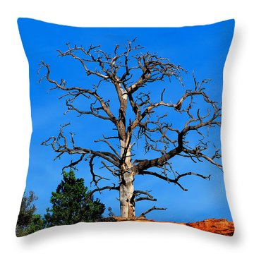 Past Prime Throw Pillow by Greg Norrell