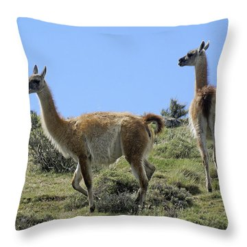 Patagonian Guanacos Throw Pillow by Michele Burgess