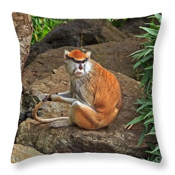 Throw Pillow featuring the photograph Patas Monkey by Kate Brown
