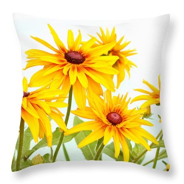 Patch Of Black-eyed Susan Throw Pillow