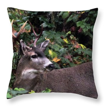 Throw Pillow featuring the photograph Patriarch by I'ina Van Lawick