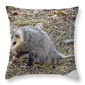 Pawing Possum Throw Pillow by MTBobbins Photography