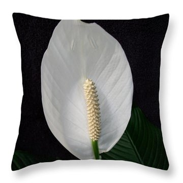 Peace Lily Throw Pillow by Sharon Duguay