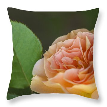 Throw Pillow featuring the photograph Peace Rose by Jane Eleanor Nicholas