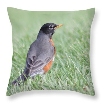 Throw Pillow featuring the photograph Peaceful Robin by Anita Oakley