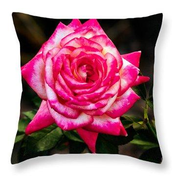 Peaceful Rose Throw Pillow