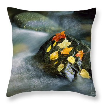 Throw Pillow featuring the photograph Peacham Brook In Fall by Alan L Graham