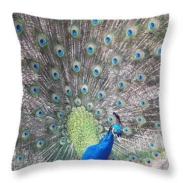 Throw Pillow featuring the photograph Peacock Bow by Caryl J Bohn