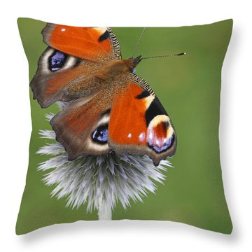 Peacock Butterfly Netherlands Throw Pillow