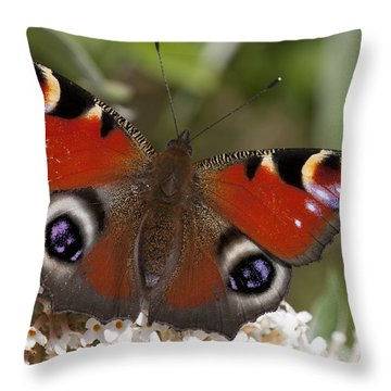Peacock Butterfly Throw Pillow by Richard Thomas