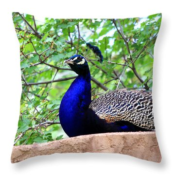 Peacock Throw Pillow by Chris Thomas