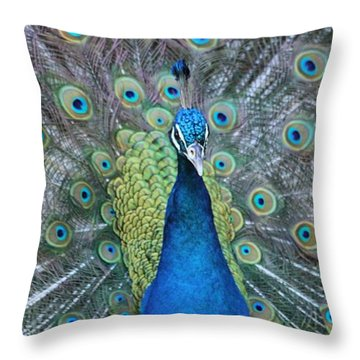 Throw Pillow featuring the photograph Peacock by Elizabeth Budd