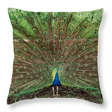 Throw Pillow featuring the photograph Peacock Full Glory by Eva Kaufman