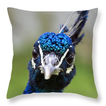 Peacock Stare Down Throw Pillow