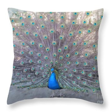 Throw Pillow featuring the photograph Peacock3  by Laurianna Taylor