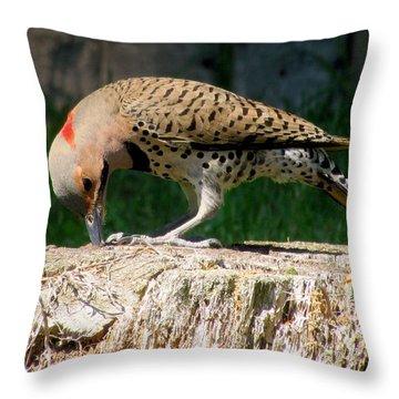 Pecking Flicker Throw Pillow by Lori Pessin Lafargue