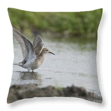 Pectoral Sandpiper Throw Pillow